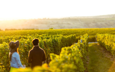 Touring Shoalhaven Wineries